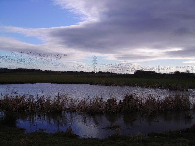 Pond Near Hardhead Farm