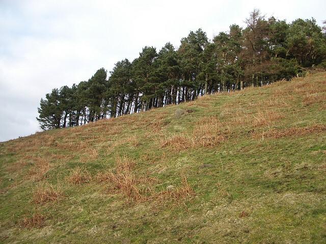 Trees near Coulshill