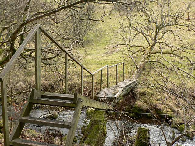 Fallen tree bridge