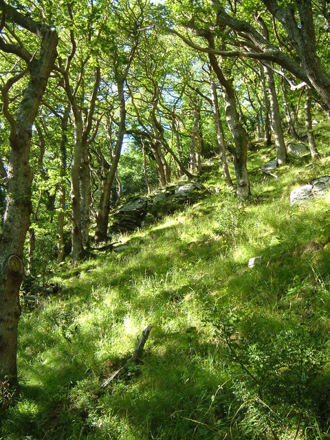 Wester Wood, East Lyn valley