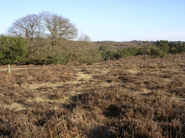 Eastern edge of Ocknell Plain, New Forest