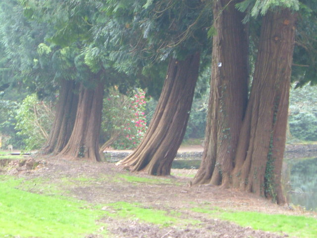 Sequoias at Holne Park