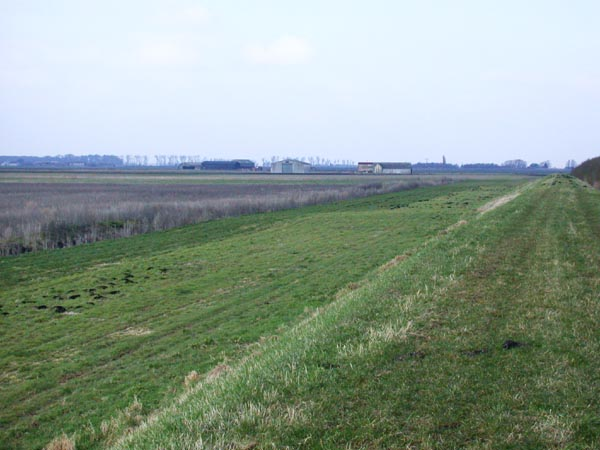 Western edge of Woodwalton Fen