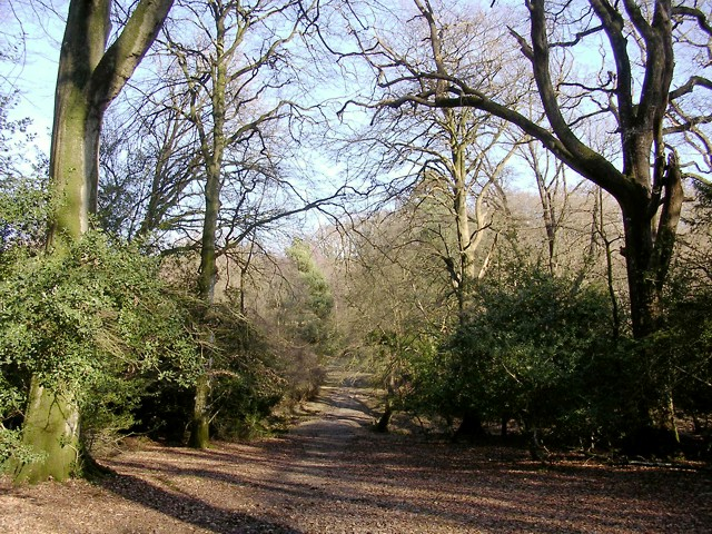 Wide path through the Ocknell Inclosure, New Forest