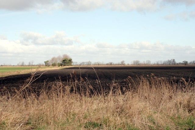 Black soiled fen field east of Dyke