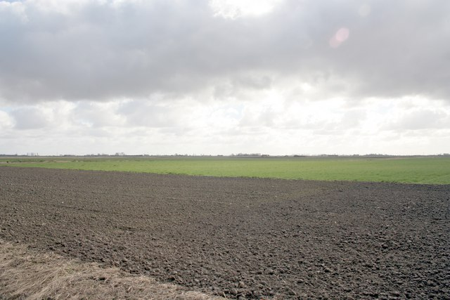 Fen fields Bourne Drove, Bourne Fen