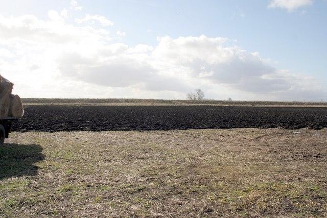 Fen field next to Bourne Eau