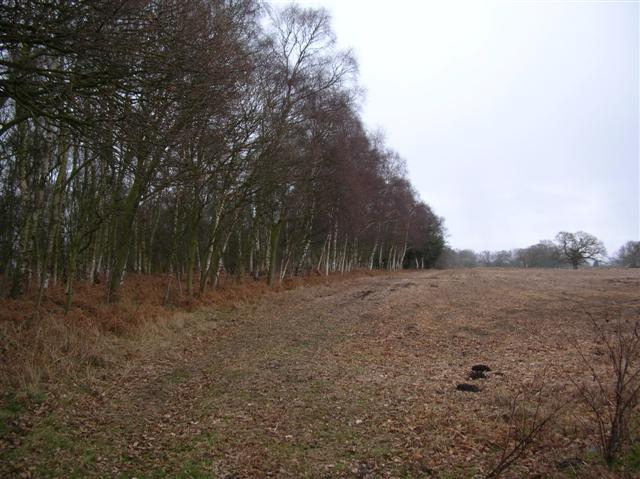Turkers Wood