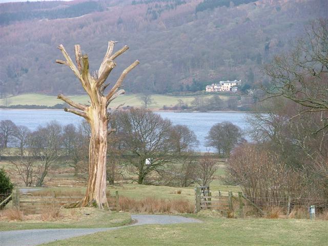 Dead Tree, Hoathwaite Farm