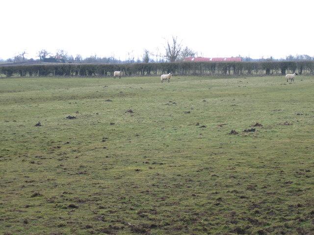 Ridge and furrow at Southleaze Farm Somerford Keynes