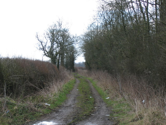 Angrove Lane at Fox Covert Somerford Keynes