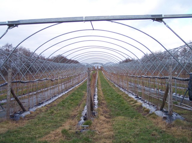 Poly Tunnel Land