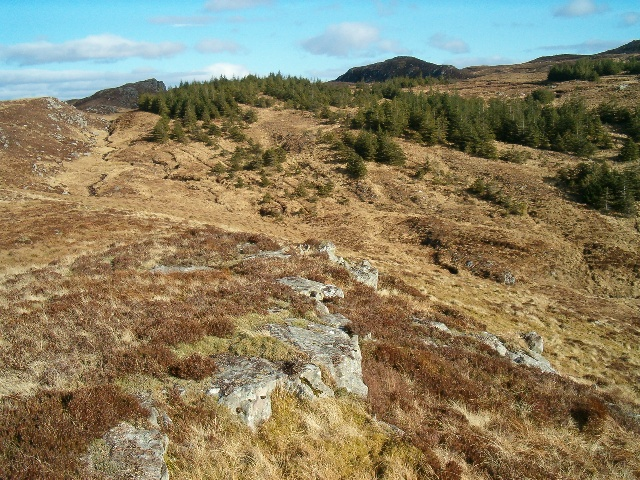 Forest yielding to the moorland