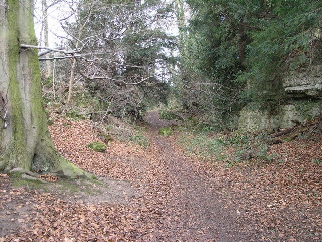 Path Through Anston Stones Wood