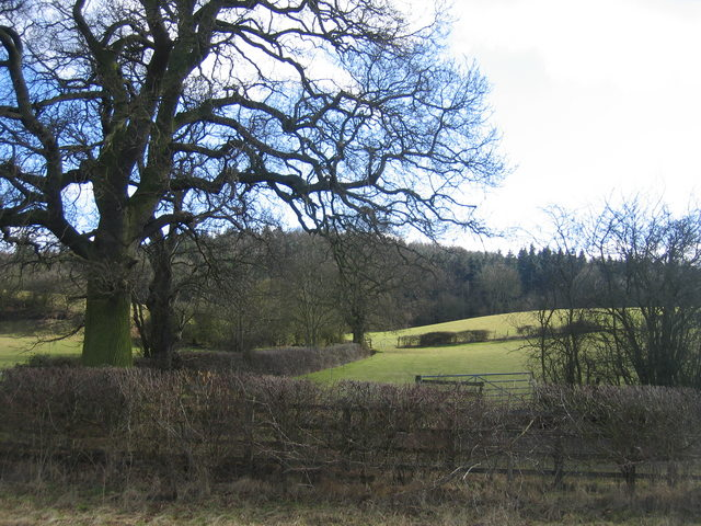 Oversley Wood