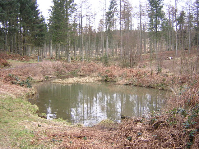 Pond in Mabie Forest