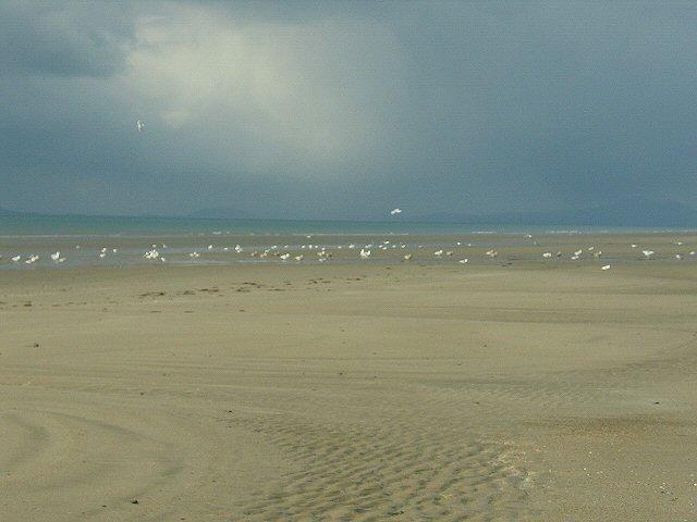 Seagulls on Llanaber beach