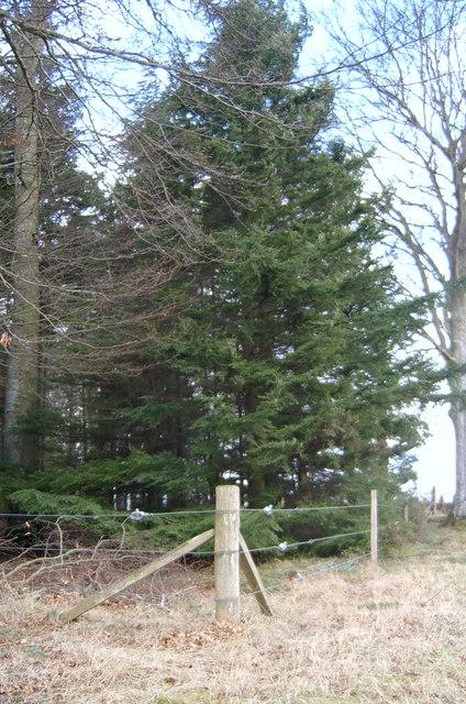 Edge of Caddam Wood.