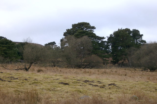Woodland, with rough grazing.