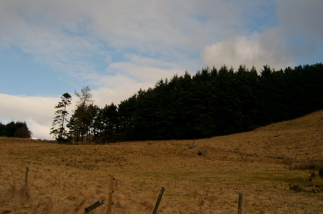 Rough grazing and Forestry