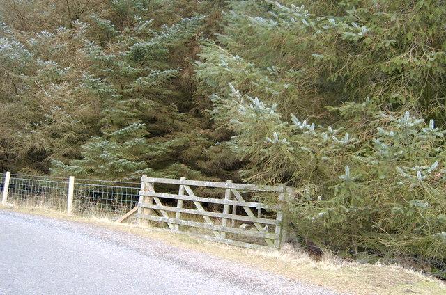 Gate into plantation behind Rottal