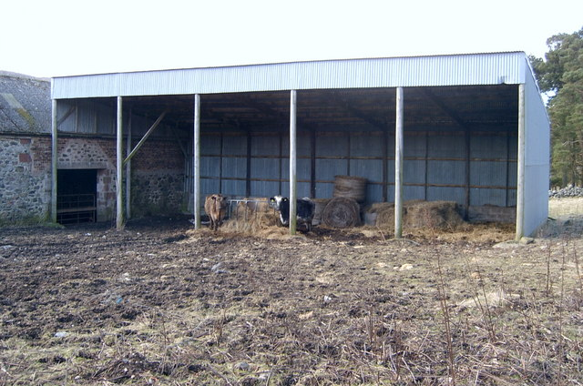 Cows in outbuilding at Wheen