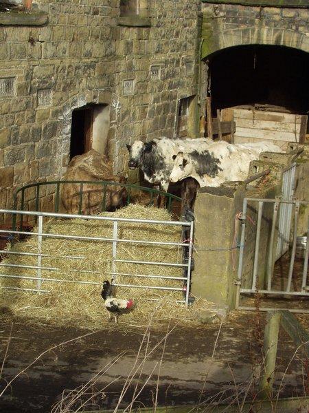 Farmyard by Parkin Lane , Apperley Bridge
