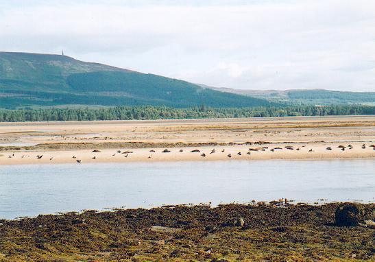 Loch Fleet sandbank