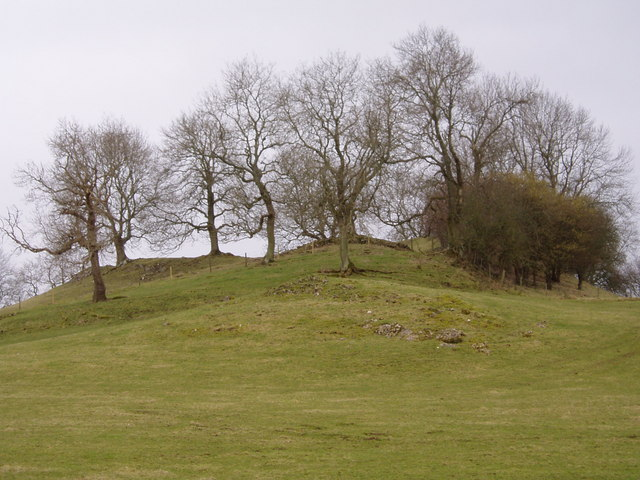 Hillock with trees