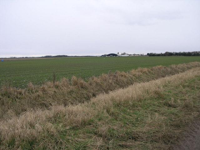 Fields Near Tollingham
