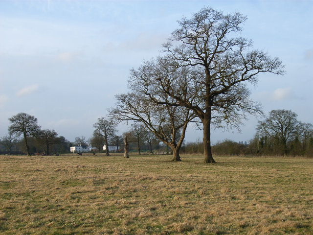 Trees and fields near Winkfield