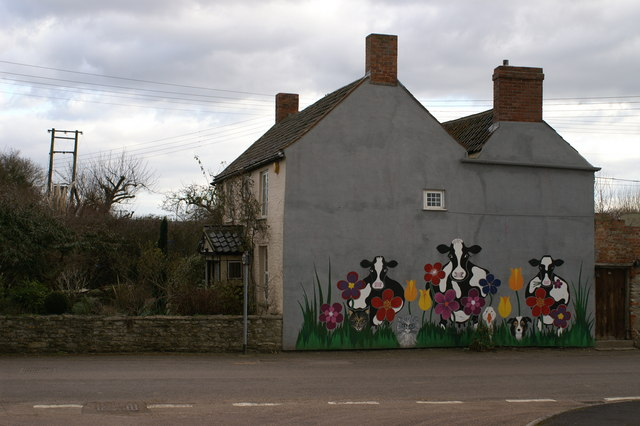 Cow Mural in Middlezoy