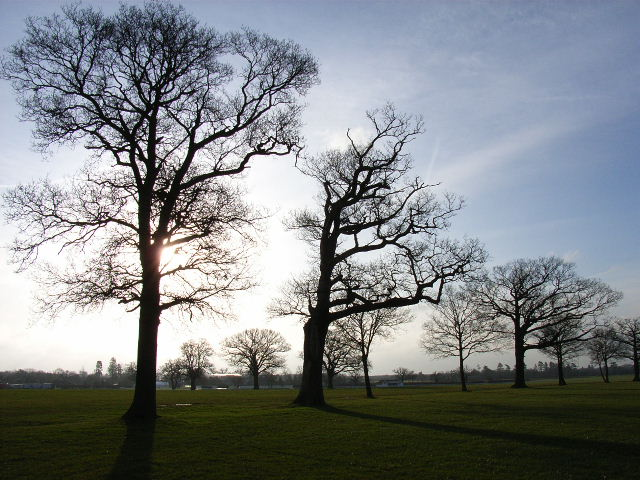 Parkland east of Winkfield