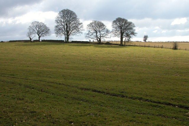 Ridge and Furrow field, near Colesbourne