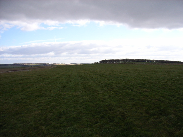 Gallops on the Compton Downs