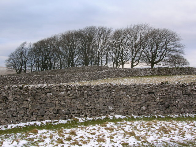 Dry stone walls and copse of trees on Smardale Fell
