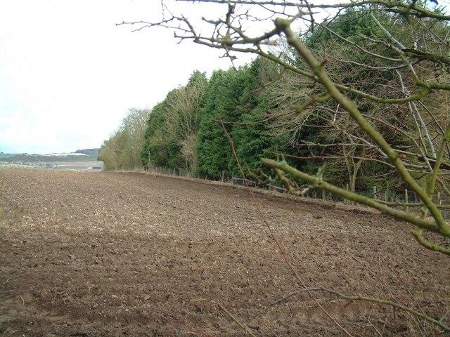 Dams Wood near Rathillet
