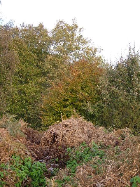 Jarn Mound