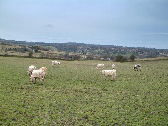 Near Totley.