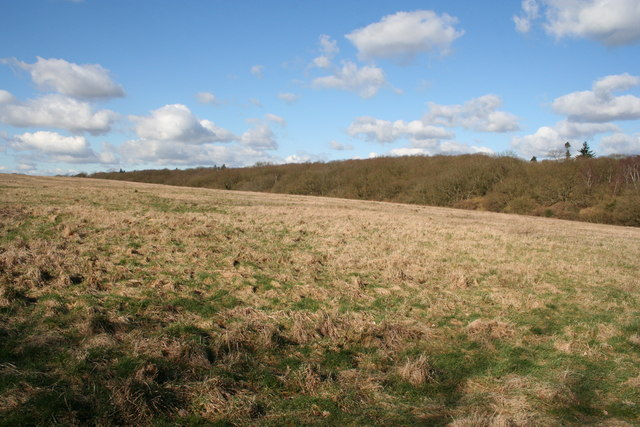 Lower Sugworth Copse