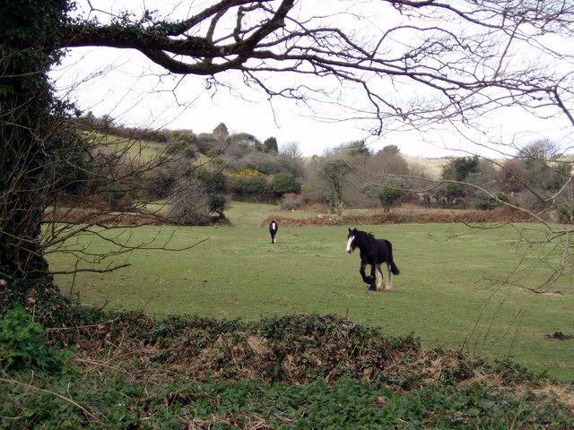 Horses in field near Nancledra