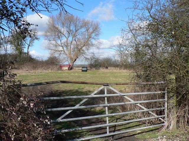 Field beside Lower Icknield Way