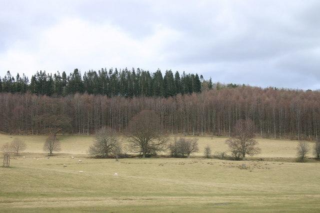 Evening Bank Wood, Dalemain