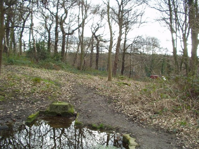 Pond in Hawksworth Wood