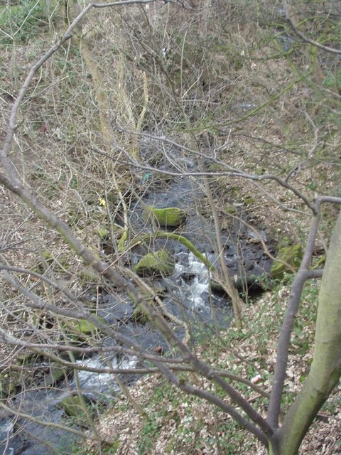 Cow Beck in Hawksworth Wood