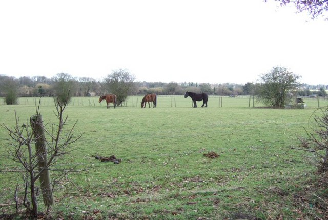 Fields and Horses