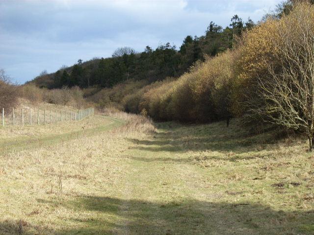 Woods, Langdon Hill