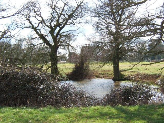Edwin's Pond