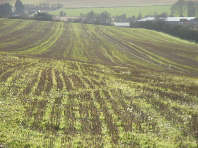 Stubble, Churn Hill