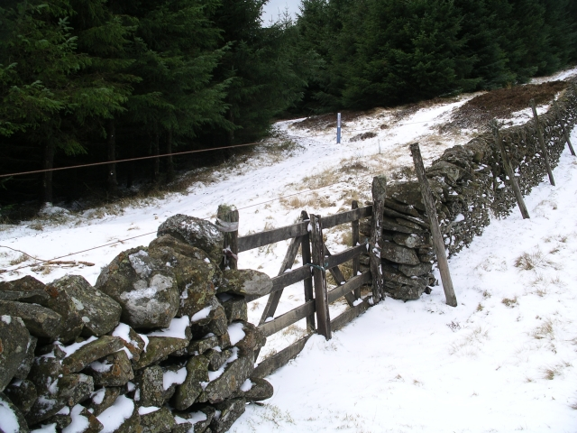 Tracks and wall, Glentress Forest